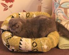 лежанка для кошки