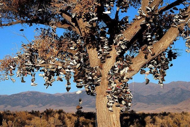 Ботинки на дереве
