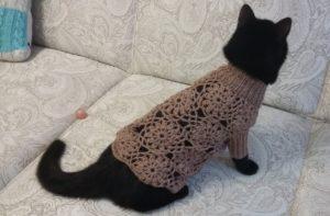 Кошке свитер_2