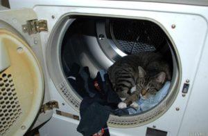 Кошк и носки в машине