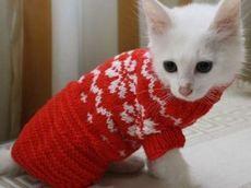 Красный свитерок для кота