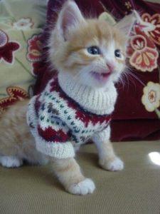 Белый свитерок с орнаментом для котенка