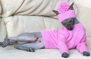 Розовый комплект для кошки