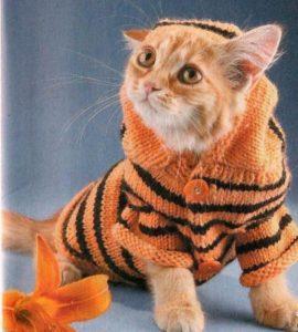 Тигриный свитерок для кота