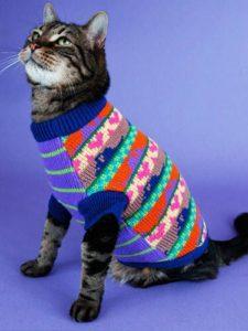 Многоцветный свитер для кота