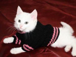 Чёрный свитер для белого кота