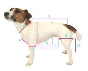 мерки для свитера собаки