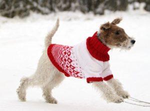 свитер крючком своими руками для собаки