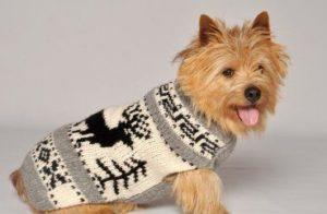 свитер для собаки своими руками