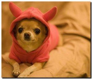 Собака в комбинезоне с капюшоном