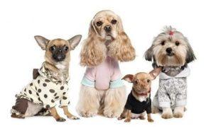Породы собак в комбинезоне