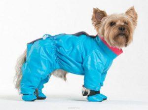 Голубой комбинезон для собаки