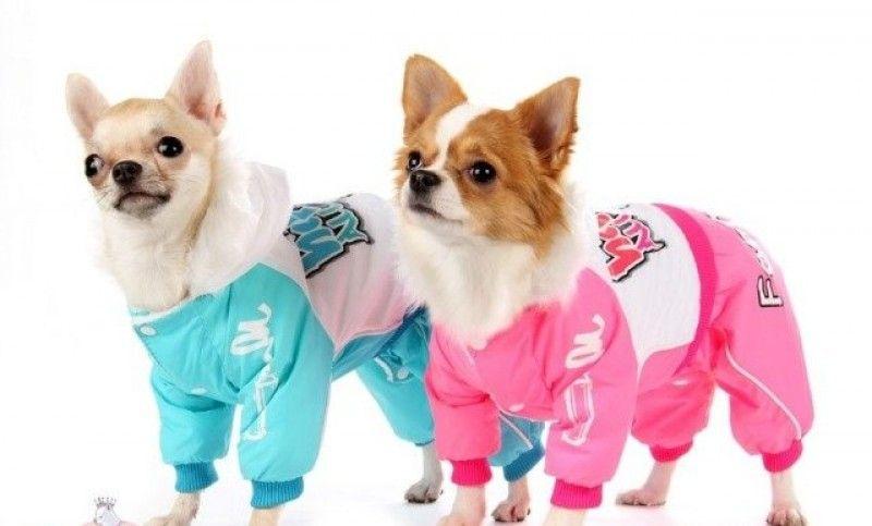 Розовый и голубой дождевики для собак