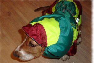 Зеленый комбинезон для собаки
