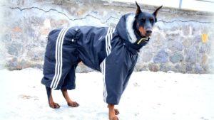Полосатый комбинезон для большой собаки