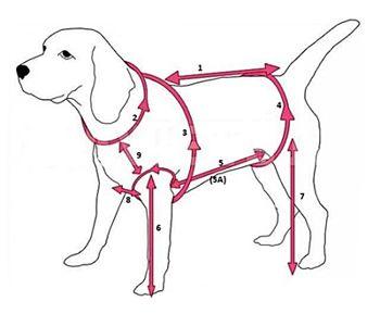 Мерки собаки