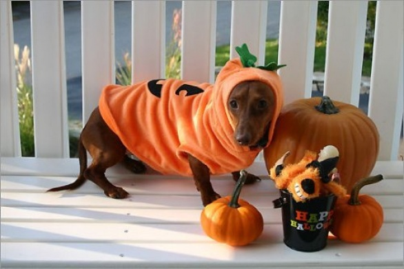 Костюм для собаки на Хэллоуин