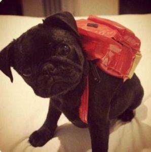 Рюкзак для собаки на спину своими руками