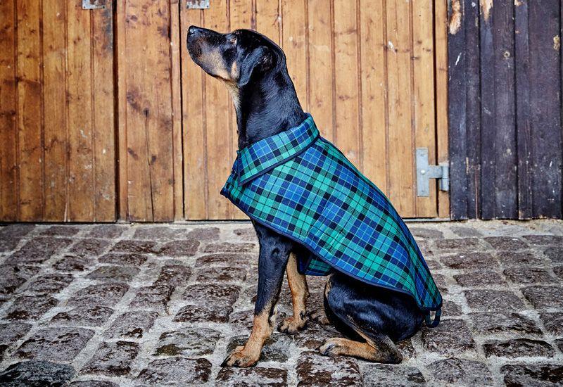 накидка собаке из старого пальто