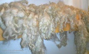 сушка овечьей шерсти