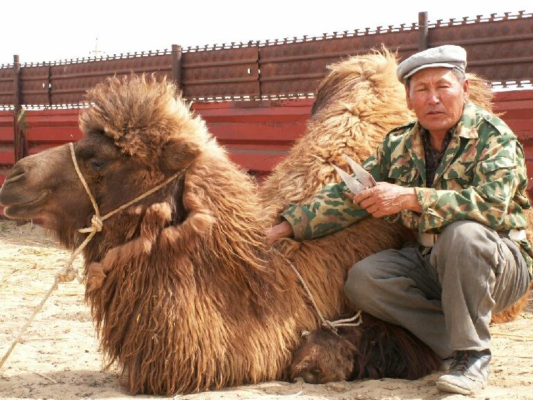 Шерсть верблюд 2