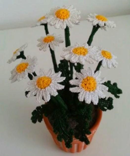 Цветы ромашки в вазоне 4