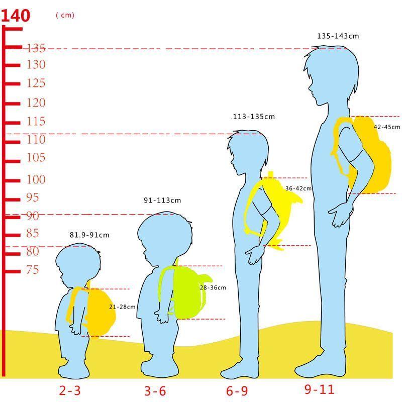 Высота спинки рюкзака в зависимости от возраста ребёнка