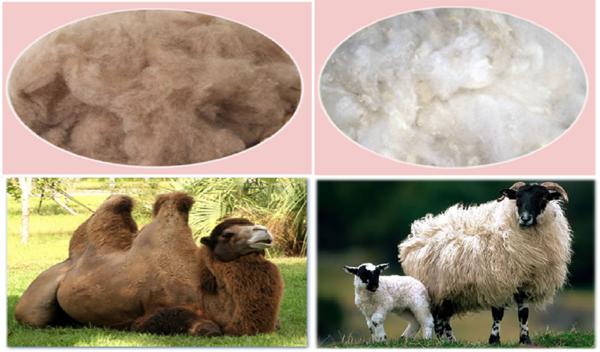 верблюжья шерсть или овечья?