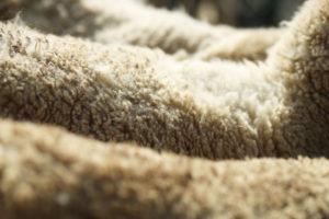 Что такое кроссбредная шерсть