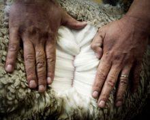 Основные отличия дорогой шерсти