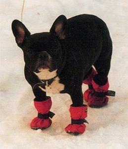 обувь для собаки своими