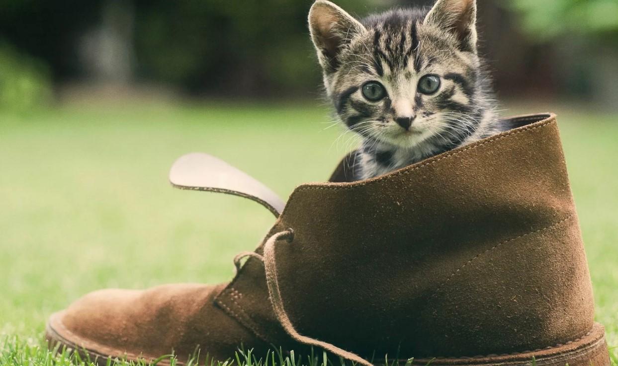 моча на обуви замша нубук