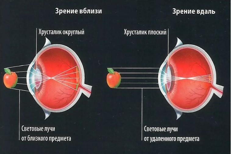 зрение 3