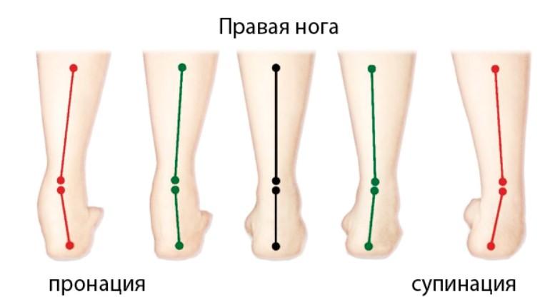 правая нога