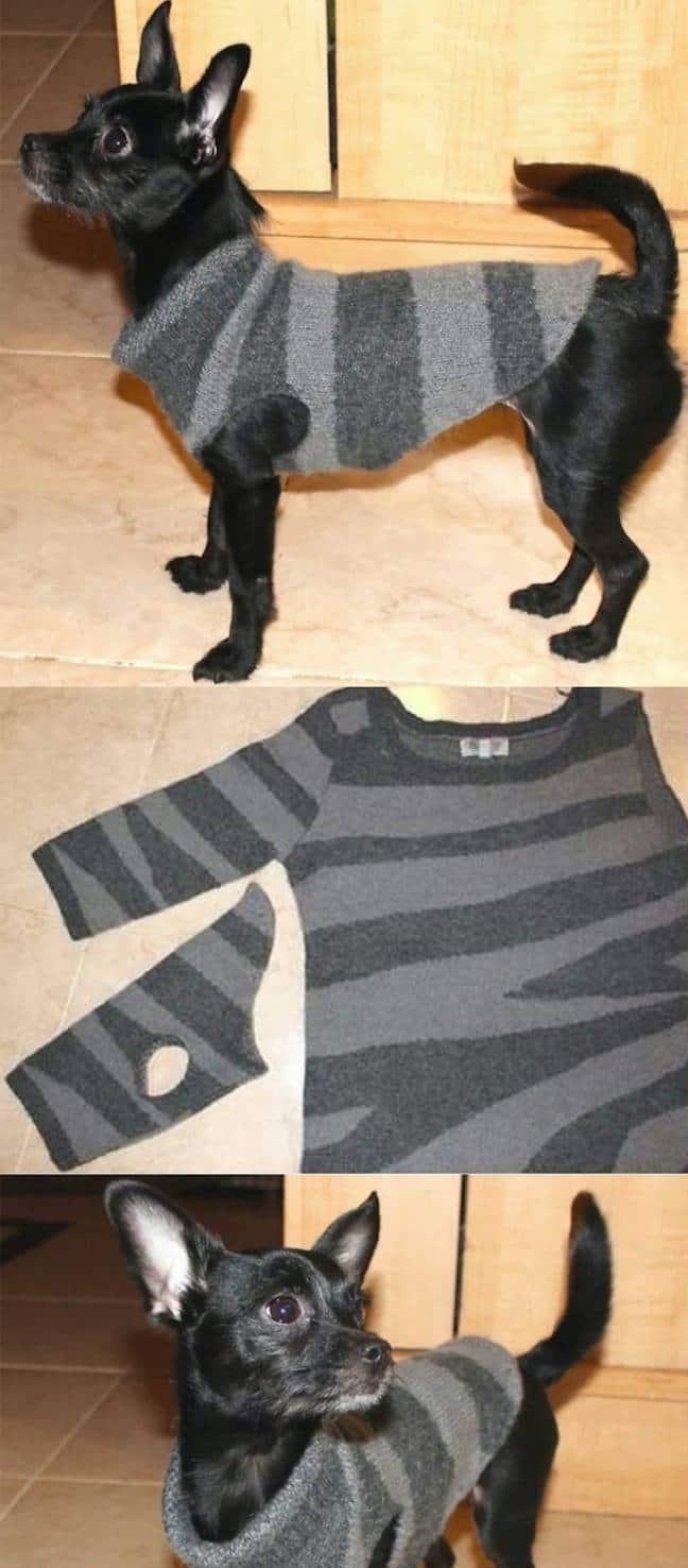 Свитер для собаки из рукава кофты